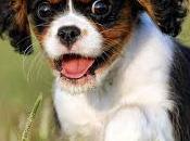 Diferentes razas perro, ¿diferentes periodos socialización?