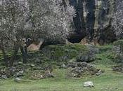 Cueva Lobera (Castellar, Jaén)