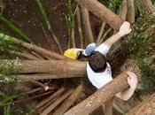 Trepar árbol podría mejorar habilidades cognitivas