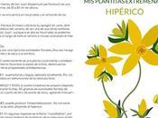 plantitas Extremeñas: Hipérico