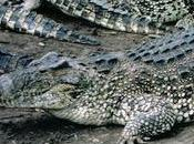 Encuentran cocodrilos propiedad privada Toronto