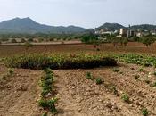 Mallorca. Fogonazos