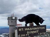 gatos observatorio Monte Washington