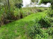 Reserva Natural Estricta Antonio recientes áreas protegidas.