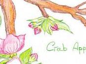 Flores Bach: Manzano silvestre