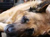 ¿Por producen convulsiones perros? causas comunes