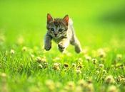 fotos gatitos podrían respuesta salvación periodismo