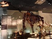 PALEOFICHA: Paraceratherium spp.