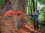 ¿Cuántos árboles destruimos nosotros año?