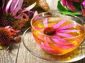 ¿Puede equinácea hacer curar resfriados?