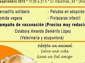 feria adopciones, Septiembre (Alcorcón)