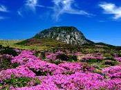 ¿Sabés todo isla Jeju tiene para mostrar?