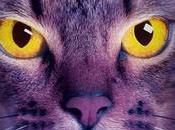 gatos guerreros Medianoche
