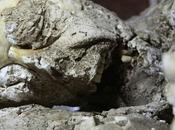Pompeya: terror sigue presente 2000 años después.