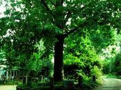 árbol posee mismo