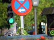 Alcorcón siete parques veintidós especies aves