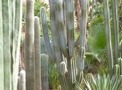 Cactus, Rodrigo Muñoz Avia