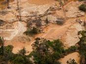 Venezuela único país Cuenca Amazónica incrementado deforestación