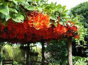 Pérgola, decoración jardines