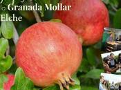Blogtrip gastronómico sobre Granada Mollar Elche