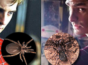 Conozcan estas arañas: Filistata maguirei Pritha garfieldi
