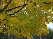 busca colorido otoño...