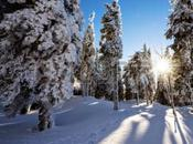 Bosques producen millones toneladas ácido fórmico