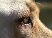 Todo Debes Necesitas saber sobre Cataratas perros