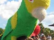 Este domingo noviembre celebra XXIII Festival Cotorra Margariteña