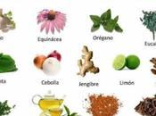 Plantas medicinales pueden faltar casa