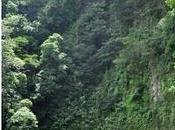 Cascadas Viento Fresco Costa Rica