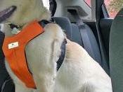 seguro viaja Perro cuando llevas Coche