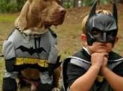 disfraces carnaval originales para perros