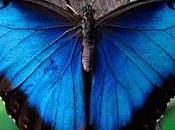 Genial lección vida Mariposa Azul.