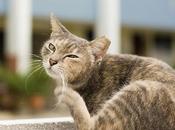 Cómo mantener piel pelaje gato sanos