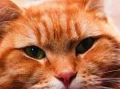 gato callejero llamado Bob, James Bowen