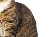 Tips para mascotas: hacer cuando gato vomita