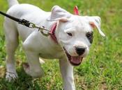 formas motivarte para pasear perro