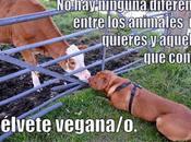 negocio animalista comercio desgracia animales