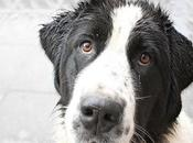 Consejos prácticos para disminuir Caida pelo perros