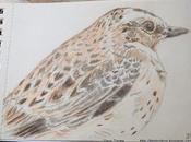 Dibujos serie aves mano: