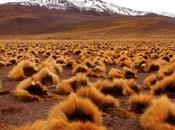 desierto Atacama, hogar acogedor para algas cianobacterias