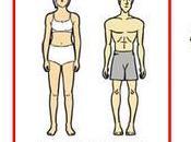 Ectomorfos, ¿cómo ganar músculo?