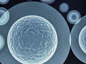 ¿Construir marcapasos biologicos mediante celulas madre?