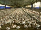 consumo carne mundo