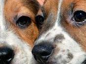 Nacen primeros perros fecundación Vitro