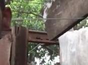 Joven cubano vive bajo mata mango