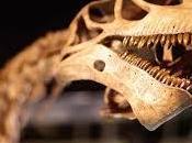 Soñar fósiles: Interpretaciones simbolismo onírico.