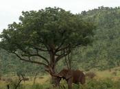 Sudáfrica (II): llegada safari
