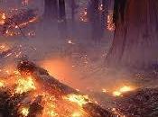 Incendios Provocados